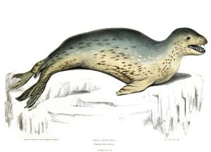 Leopard_Seal_blog shackleton jesus alcoba